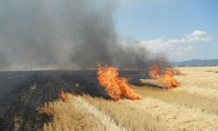 Un incendiu de proporții a mistuit 70 de hectare de porumb în județul Arad