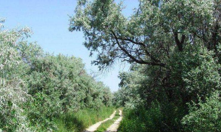 Guvernul vrea să scoată Rezervația Biosferei Delta Dunării din patrimoniul UNESCO, de dragul Armatei