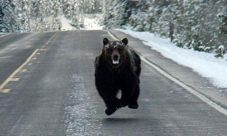 Urs de 300 de kg lovit mortal de o maşină la Braşov