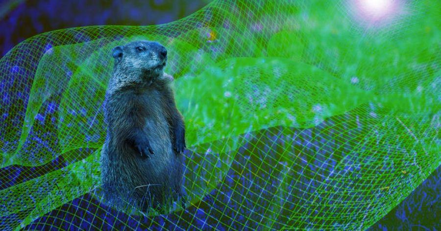 DISPARE marmota? Cine vrea să îl schimbe pe PROFETUL vremii