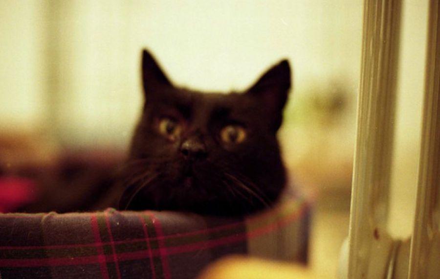 O pisică din Spania, diagnosticată cu noul coronavirus