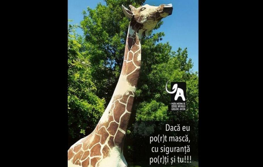 """Muzeul Naţional de Istorie Naturală """"Grigore Antipa"""" se redeschide de Ziua Copilului"""