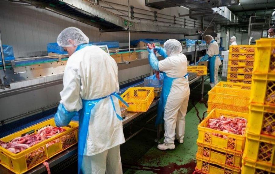 Un alt FOCAR de coronavirus printre muncitorii români de la un ABATOR din Germania