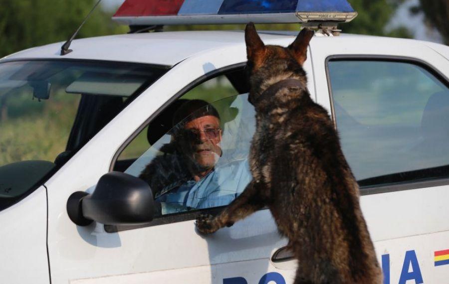 Proiectul POLIŢIA ANIMALELOR revine în actualitate