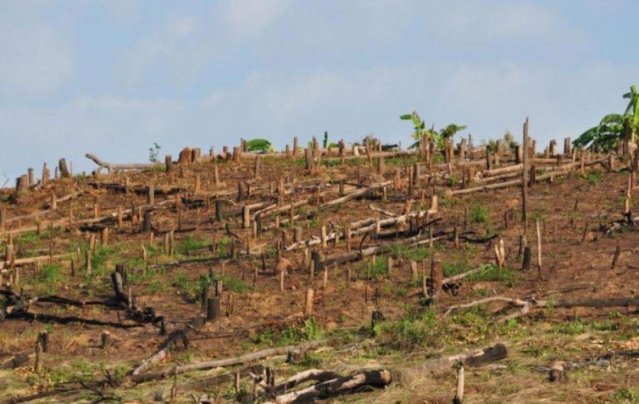 Comisia Europeană AMENINȚĂ România din cauza tăierilor ilegale de păduri