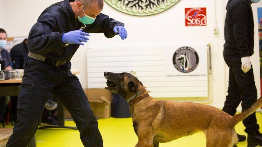 La limita posibilului: Câini antrenați să DETECTEZE persoane infectate