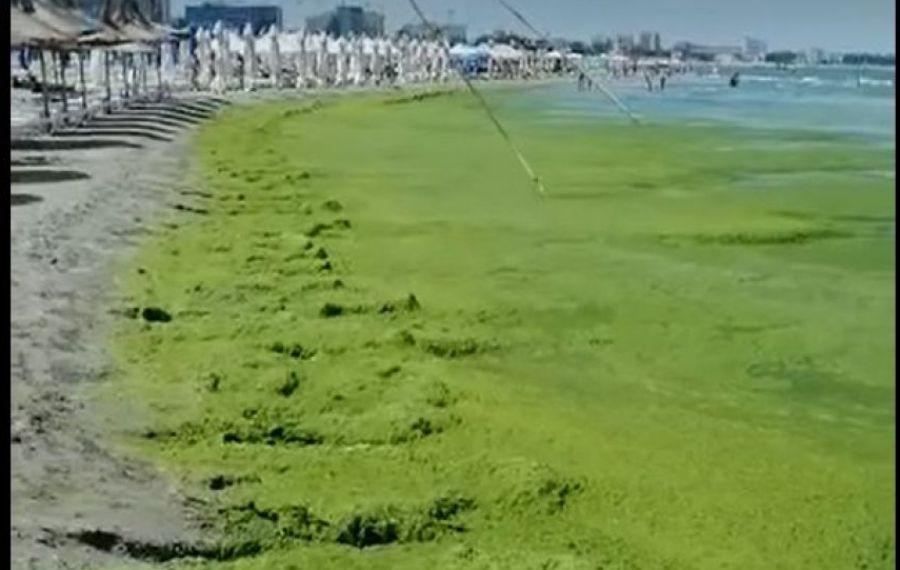 IMAGINILE ZILEI: Tone de alge au invadat litoralul românesc