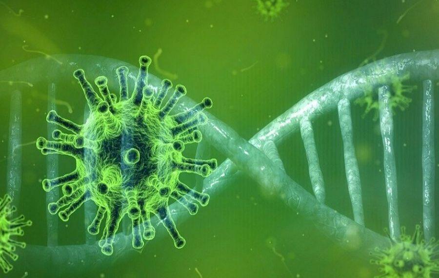 Studiu: Cât rezistă ANTICORPII produși după COVID-19 în organism