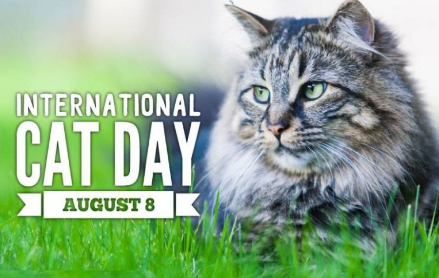 8 AUGUST – Ziua Internațională a Pisicii