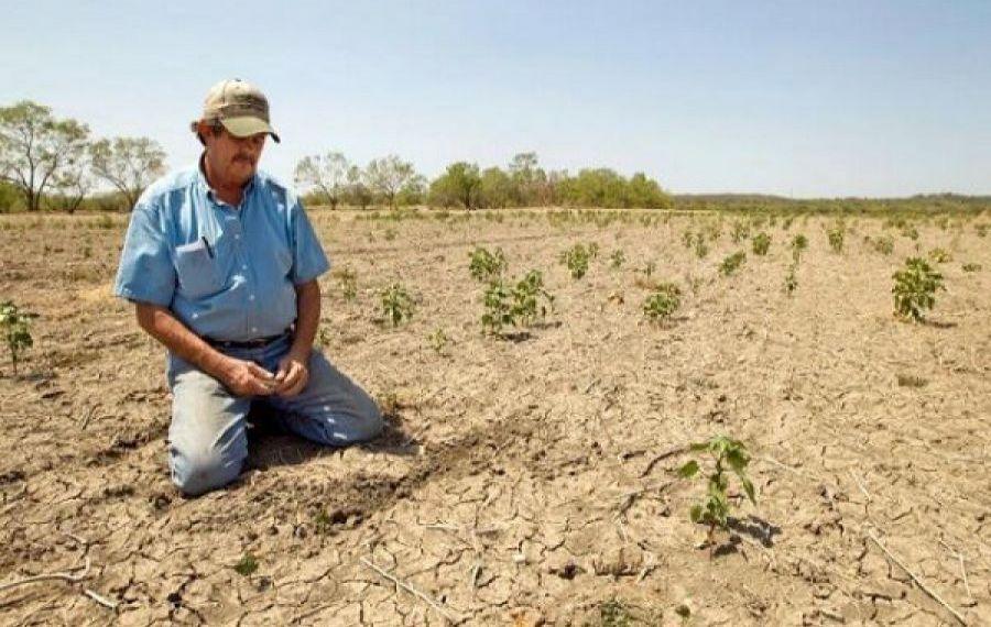 DESPĂGUBIRI pentru 24.400 de fermieri cu producția afectată de secetă