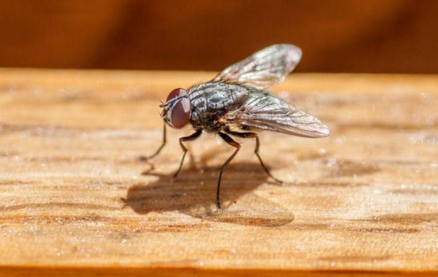 Pățania bărbatului care a dat FOC la casă, încercând să omoare o muscă