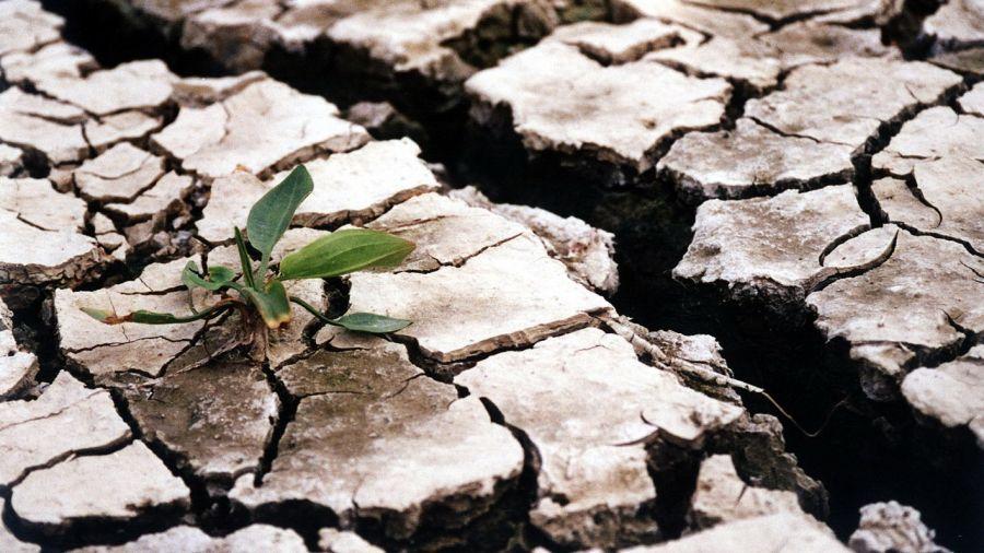 Fermierii au ajuns la capătul puterilor și lansează un apel disperat către Guvern: Vrem apă!