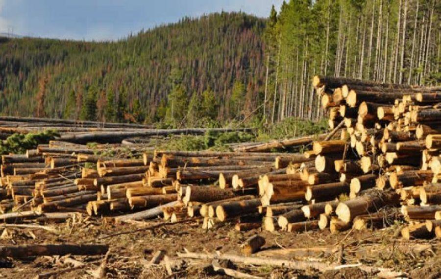Un șef de district silvic s-a SINUCIS după ce s-au descoperit pagube uriașe în cantoanele pe care le administra