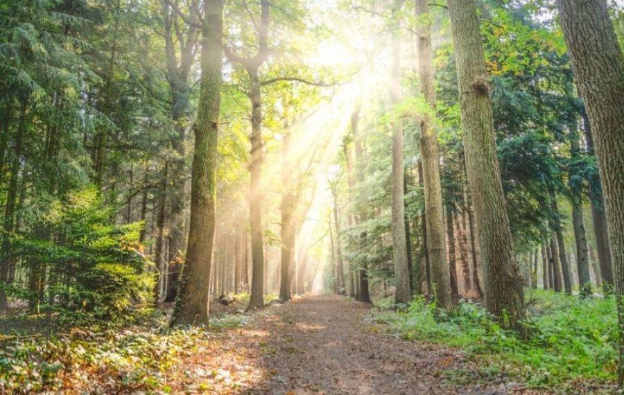 Norvegia este prima țară care interzice complet defrișările și boicotează lemnul provenit din pădurea tropicală