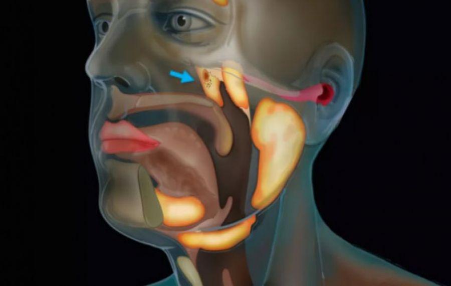 Oamenii de știință au descoperit un nou ORGAN în corpul uman