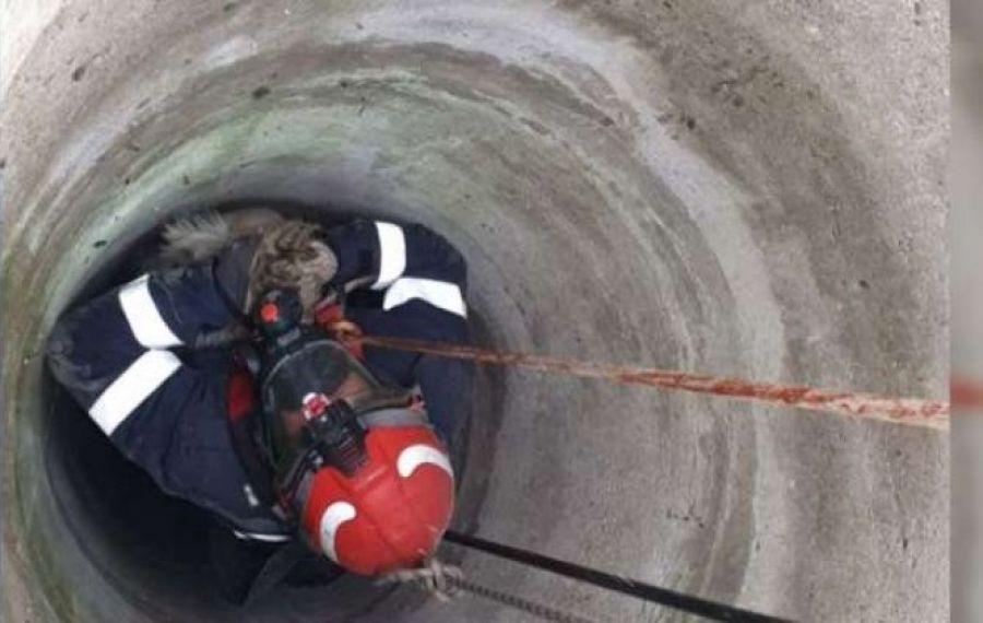 Capră căzută într-o fântână, salvată de un pompier de la ISU Buzău