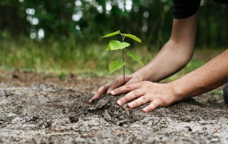 Romsilva demarează campania de împădurire de primăvară: Aproximativ 20 de milioane de puieți forestieri vor fi plantați