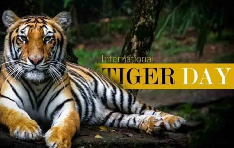 Ziua Tigrului, sărbătorită la Grădina Zoologică din Brașov