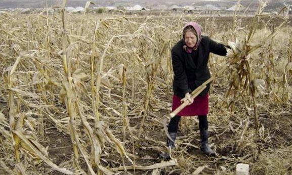 Fermele de subzistenţă nu mai trebuie favorizate. Ajutoare sociale camuflate în subvenţii agricole