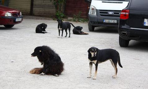 Protest la Primărie cu câine mort. Scandalul maidanezilor a ajuns la Chişinău
